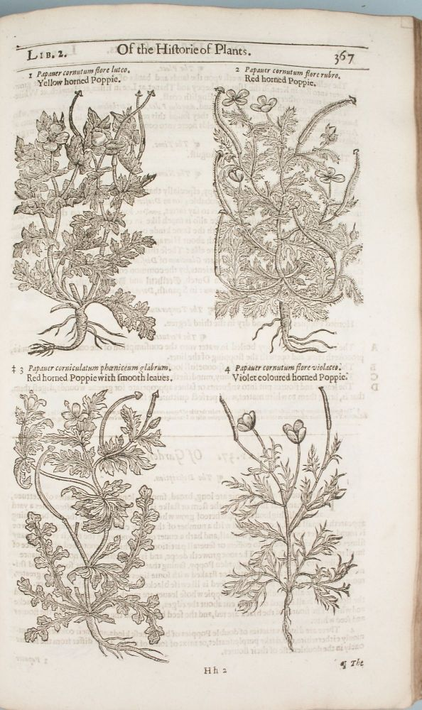 The Herball or Generall Historie of Plantes. Gathered by John Gerarde of London Master in Chirvrgerie. Very much Enlarged and Amended by Thomas Johnson Citizen and Apothecarye of London. John Gerard.