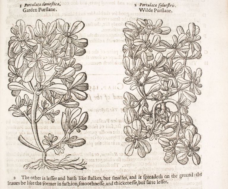 The Herball or Generall Historie of Plantes. Gathered by John Gerarde of London Master in Chirvrgerie. Very much Enlarged and Amended by Thomas Johnson Citizen and Apothecarye of London.
