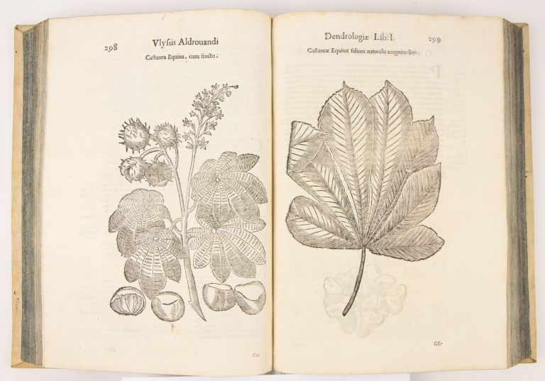 The complete 13-volume set of Aldrovandi's encyclopedia of natural history. Vols I-III. Ornithologia; Vol. IV. De Piscibus; Vol V. Monstrorum Historia; Vol VI. De Quadrupedibus Digitatis Viviparis [et] Oviparis; VII. Quadrupedum omnium bisulcorum historia; VIII. De Quadrupedibus solidipedibus; IX. De Reliquis Animalibus Exanguibus; X. Serpentum, et Draconum Historiae; XI. Dendrologia; XII. De Insectis; XIII. Musaeum Metallicum.