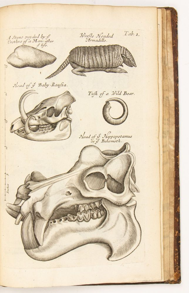 Musaeum Regalis Societatis or a Catalogue & Description Of the Natural and Artificial Rarities...