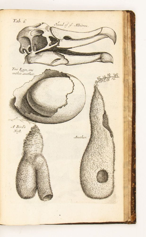 Musaeum Regalis Societatis or a Catalogue & Description Of the Natural and Artificial Rarities Belonging to the Royal Society and preserved at Gresham Colledge. Made By Nehemiah Grew M. D. Fellow of the Royal Society, and of the Colledge of Physitians. Whereunto is Subjoyned the Comparative Anatomy of Stomachs and Guts. By the same Author.